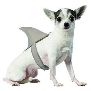 Dog Shark Fin Costume
